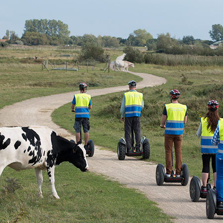 Five tourists using Segway PTs on country side path as cows look on