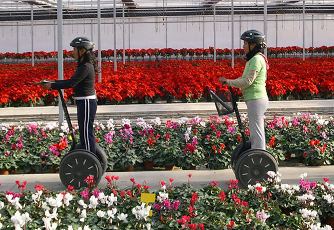 Two i2 SE Segways with riders moving through a flower nursery
